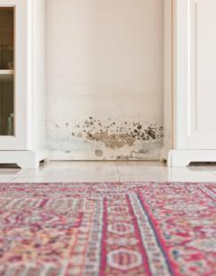 10 WAYS TO PREVENT MOLD GROWTH